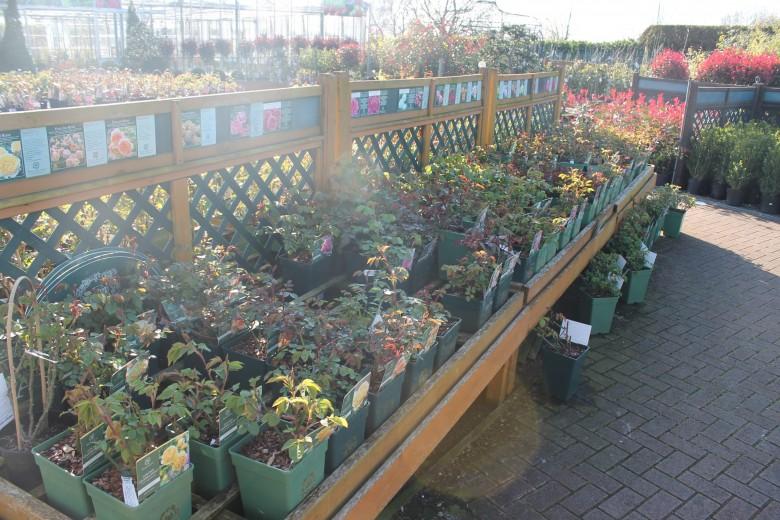 The Dawn Nurseries Shurdington Cheltenham